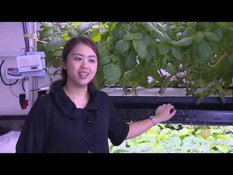 هذا الصباح- المزارع المعلقة وسيلة لإنتاج الخضروات بسنغافورة  - 11:55-2018 / 9 / 25