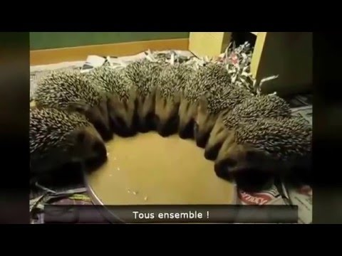 Vid os dr les d 39 animaux compilations 2016 youtube - Videos droles d animaux ...