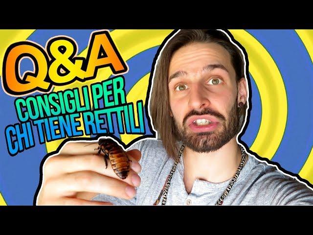 Q&A - Rispondo ai vostri commenti