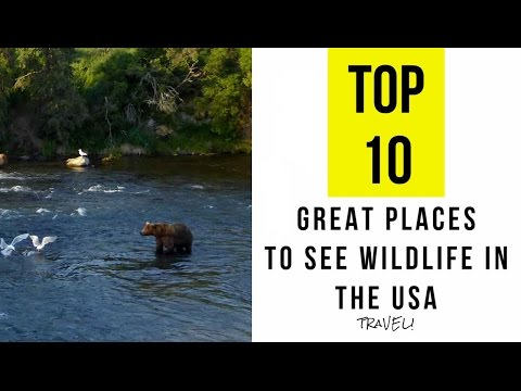 Top 10. Great Places To See Wildlife In The USA