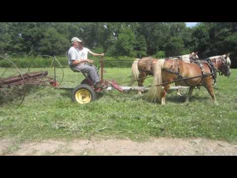 Dump Rake and Discing with Haflinger Horses