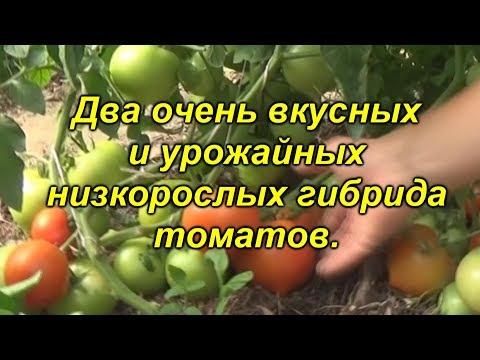 Два ОЧЕНЬ хороших гибрида томата для ОГ, которые мы будем выращивать.