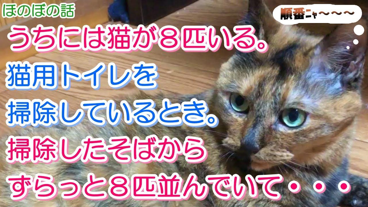 【猫のほのぼの話】うちには猫が8匹いる。猫用トイレを掃除しているとき。掃除したそばからずらっと8匹並んでいて・・・