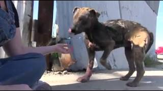 Homeless Puppy Rescued By Hope For Paws In California