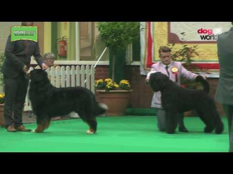Birmingham National Dog Show 2017 - Working group