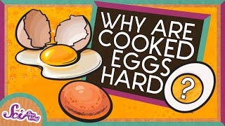 Why Does Cooking Eggs Make Them Hard?