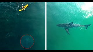 Kayakers Have No Idea Two Great White Sharks Are Following Them