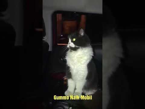 Agus Kus - Gummo Kucing Ganteng