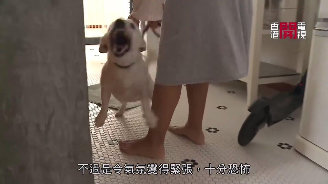 積羅素犬為護主狂吠 Eric Ko教柔弱狗主用肢體發放信號 (煉狗術師S2 - EP22-1) - YouTube