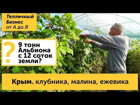 Смотреть Крым. Клубника, малина и ежевика в Крыму - как выращивают ягоду крымские фермеры онлайн