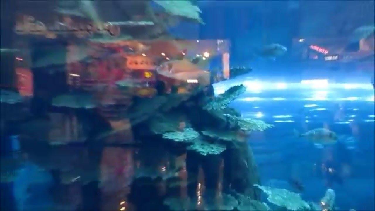 Freshwater Aquarium Fish In Dubai - Dubai aquarium underwater zoo dubai emirados rabes unidos janeiro 2016