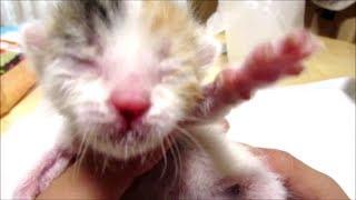 子猫赤ちゃん保護 お腹いっぱいミルクを飲んだんじゃなかったの
