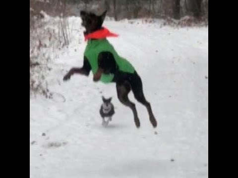Dog thinks snowflakes are treats falling from sky