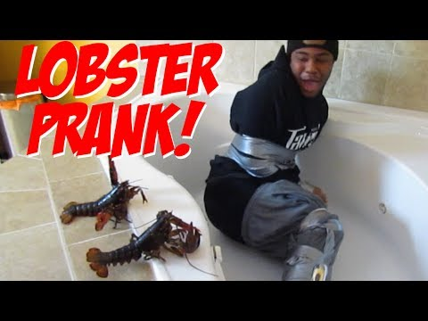 The Lobster Prank Youtube