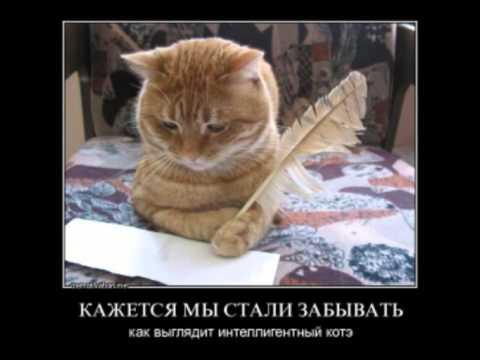 Слушать прикольные песни про котов