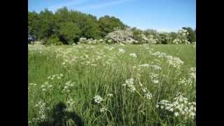 Probstei / Schleswig Holstein:  Stein, auf der SteilKüste; 04062013