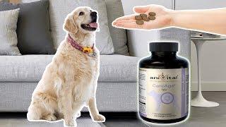 aniVital CaniAge – для полноценной жизни пожилых собак
