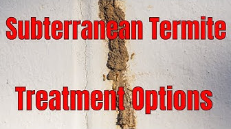 Subterranean Termite Control Treatment Options 🧐 Make the Right Choice for You