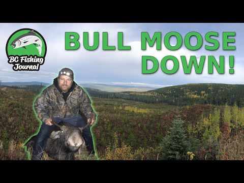 BC Moose Hunting – BULL DOWN {Catch Clean Cook}