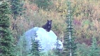 BOOM, HEAD SHOT black bear - Stuck N the Rut 34