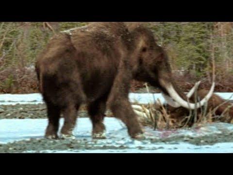 Нашли живого мамонта под Якутском!