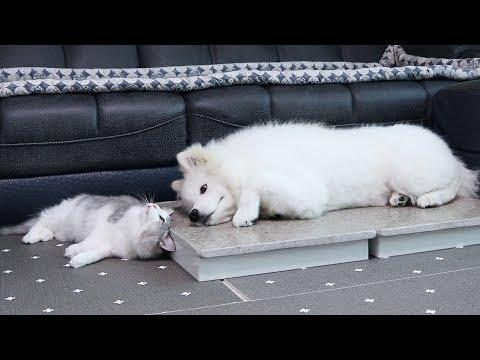 강아지와 고양이가 어떻게 이렇게 친할 수 있을까?