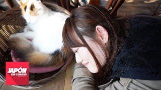 Download Video NEKO CAFE EN JAPÓN ¿POR QUÉ EXISTEN? MP3 3GP MP4