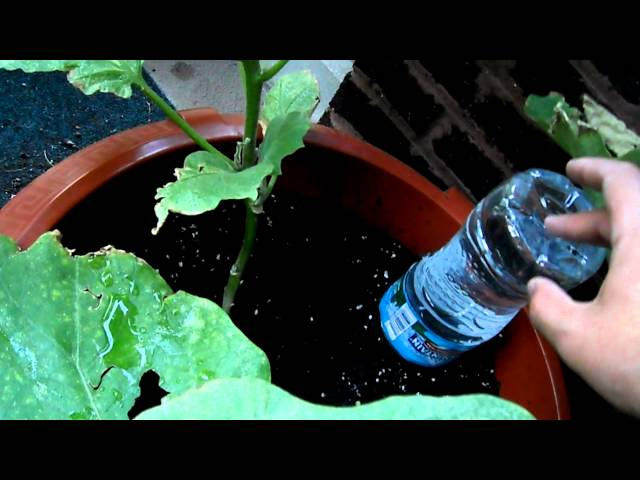 How to Water Plants While Away | Automatic Plant Watering System Diy House Plant Watering System on diy fodder system, diy plant pots, diy plant watering bottle, plant irrigation system, diy plant cages, diy plant shade, diy plant containers, diy plant growing system, diy plant fence, diy plant watering devices, plantbottle growing system, diy plant watering globes, diy water filter, diy plant flowers, diy plant waterer, garden drip irrigation system, diy self-watering planter, diy plant food, diy plant lighting, diy plant stand,