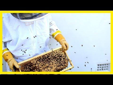 Spike in backyard beekeeping in perth as people embrace organic foods