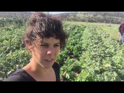 Organic farm in Willunga