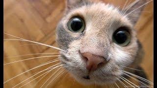 приколы с котами/бешенные коты/подборка кошачих сумасшествий