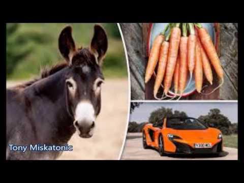 Burro Confunde Auto Con Zanahoria Y Se Lo Come Youtube Viendo la temporada que está viviendo mclaren honda en la fórmula 1, que un burro hubiera mordisqueado el alerón de uno de sus coches, sin duda, sería el broche de oro a tres. burro confunde auto con zanahoria y se