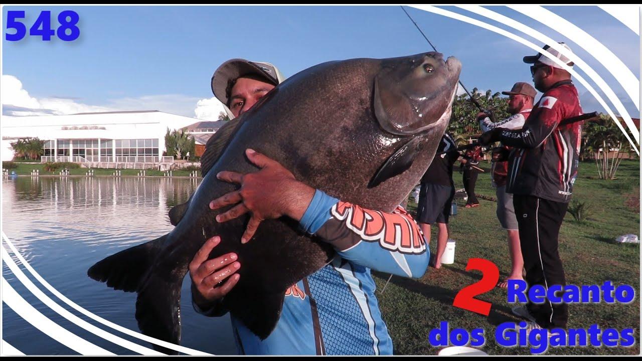 Recanto dos Gigantes II - Pescaria de traíras e tambacus - Fishingtur na TV 548