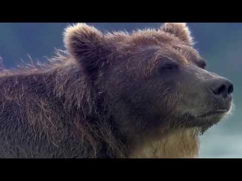 The Bear Man Interview