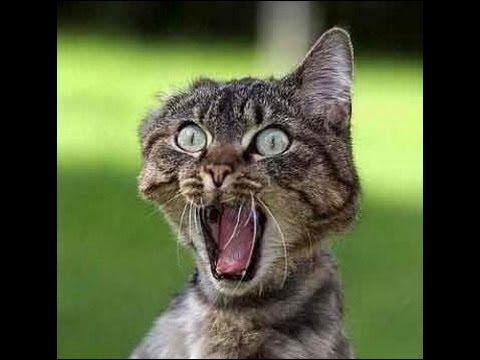 """Résultat de recherche d'images pour """"chat minou rentrés à la maison humour animé"""""""