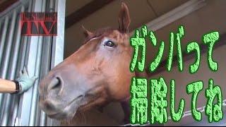 今回の指令は「愛知牧場に行ってお手伝いをしてこい!」というもの。最...
