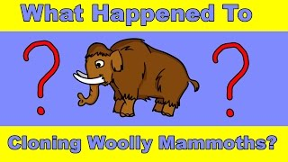 Why Haven't We Cloned a Woolly Mammoth Yet?