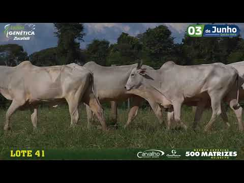 LOTE 041