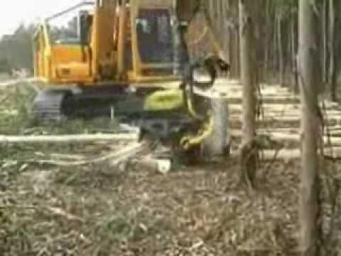 Máy cưa cắt cây thông