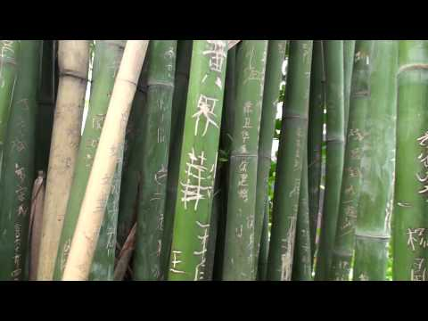 Bamboo at Yuelu Academy, Changsha