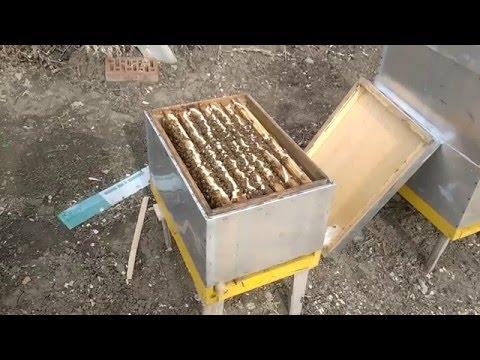 Белковая подкормка пчелам