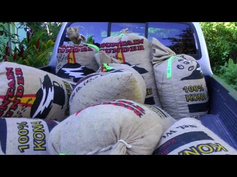 Some Steps for Processing Coffee   Coffea arabica   HD Video from YouTube · High Definition · Duration:  6 minutes 48 seconds  · 1.000+ views · uploaded on 18-10-2015 · uploaded by JungleJoelVideos