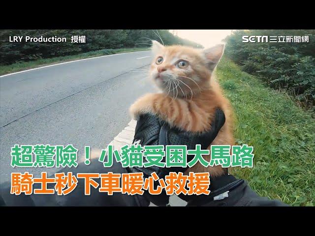 超驚險!小貓受困大馬路 騎士秒下車暖心救援|三立新聞網SETN.com