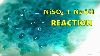 Nickel II Sulfate Reaction With Sodium Hydroxide (NiSO4 + NaOH)