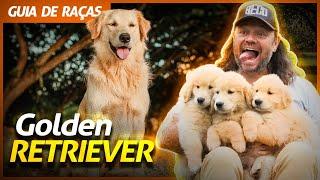 GOLDEN RETRIEVER, O GIGANTE BRINCALHÃO! | RICHARD RASMUSSEN