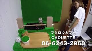 フクロウカフェ Chouette http://www.chouette1.jp/