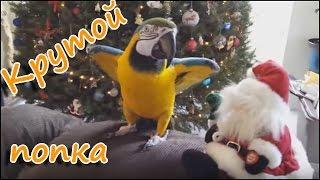 Попугай замочил Санту )) Приколы с животными 2016 Забавные животные Ржач Угар | Top 10