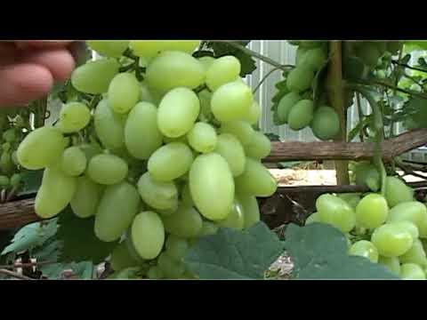 Виноградник О М