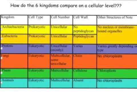 Six Kingdoms on a Cellular Level