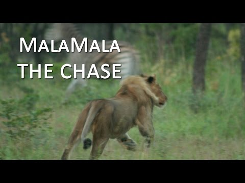 MalaMala | The Chase